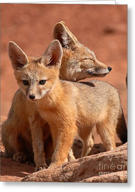 Kit Fox Mother Looking Over Pup Greeting Card by Max Allen