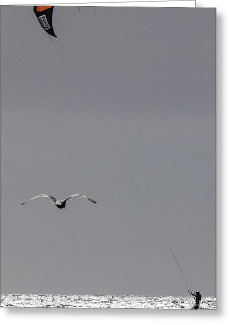Kite Boarding With Seagull Greeting Card by Steven Natanson