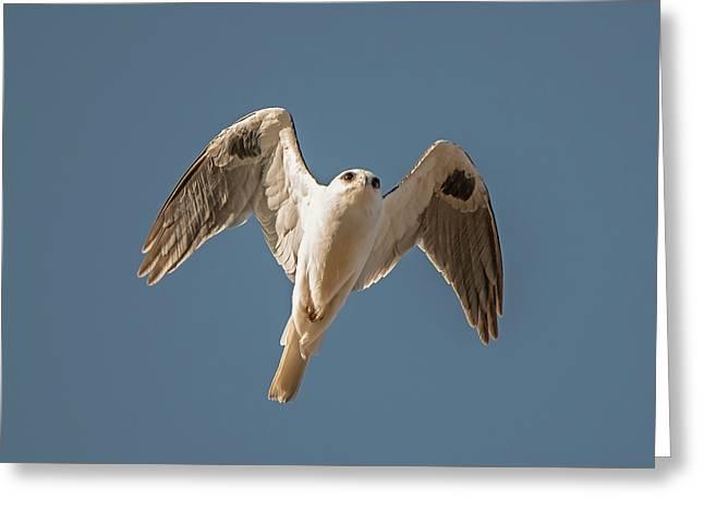 Kite In Flight Greeting Card by Loree Johnson
