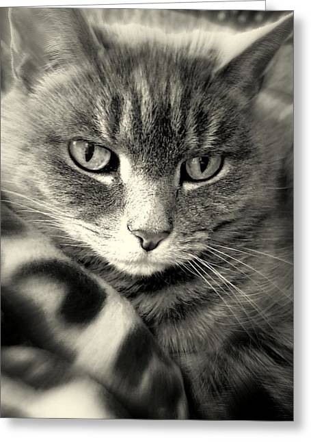 Kitteh Getting Her Daydream On Greeting Card by Susan Lafleur