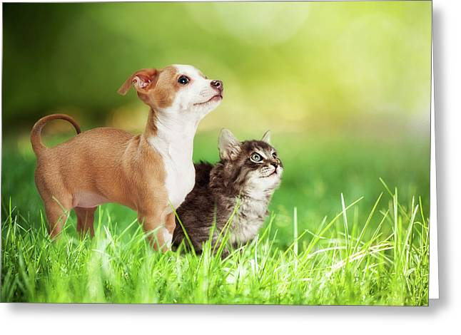 Kitten And Puppy In Long Green Grass Greeting Card by Susan Schmitz
