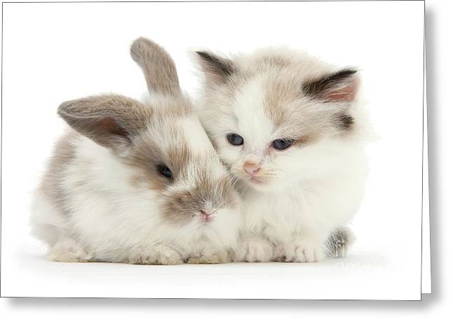 Kitten Cute Greeting Card