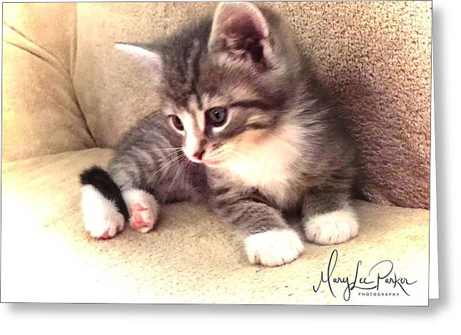Kitten Deep In Thought Greeting Card