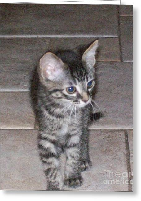 Martius Kitten Greeting Card