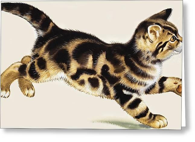 Kitten Greeting Card by English School