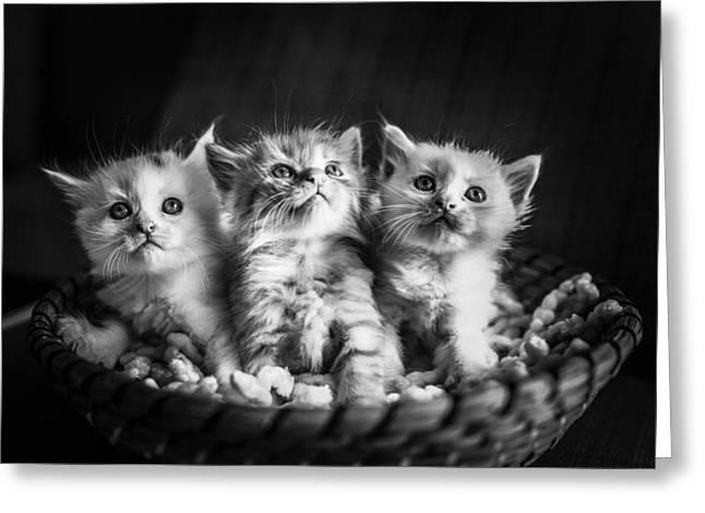 Kitten Trio Greeting Card