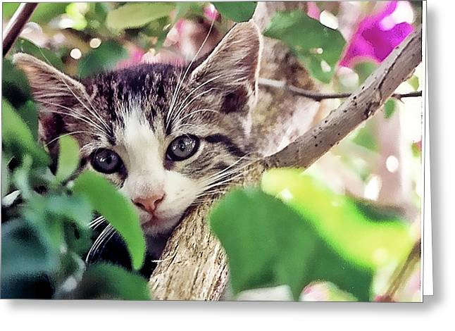 Kitten Hiding Out Greeting Card by Francesco Roncone