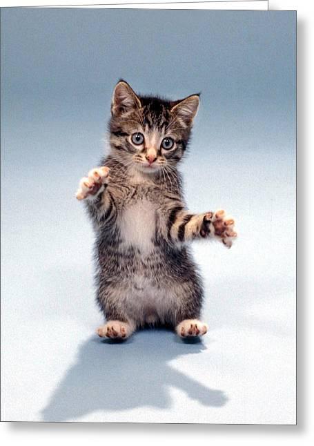 Kitten Hug Greeting Card