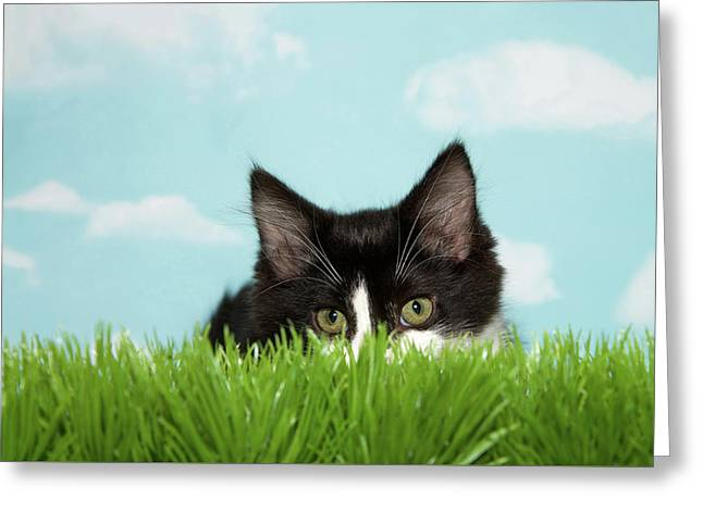 Kitten Hunting In Tall Grass Greeting Card by Sheila Fitzgerald