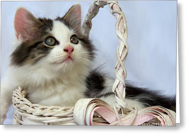 Kitten In Basket Greeting Card by Jai Johnson