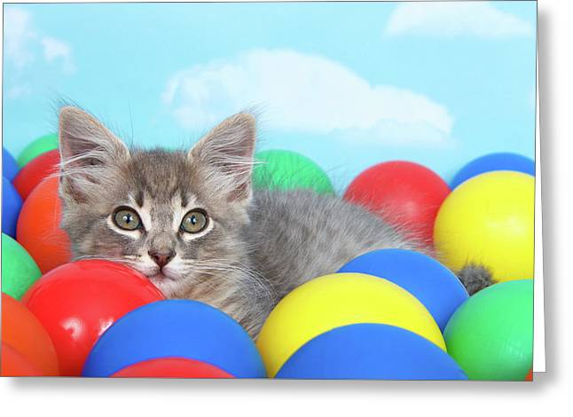 Kitten Laying In Brightly Colored Balls Greeting Card