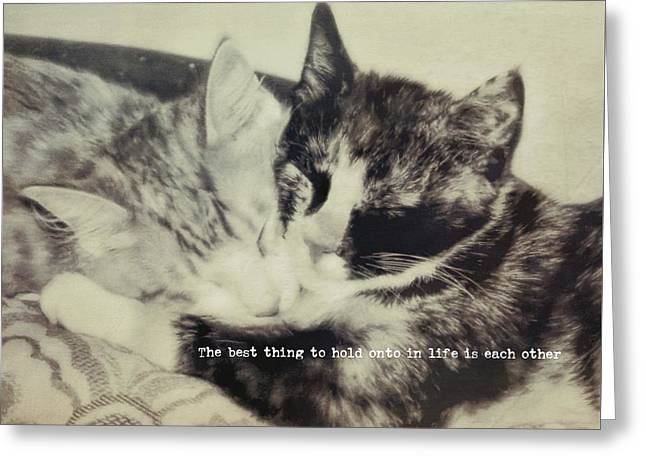 Kitten Nap Quote Greeting Card by JAMART Photography