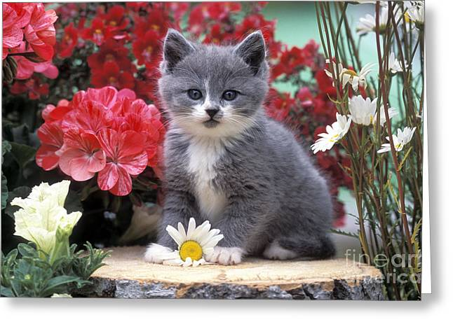Kitten Playing With Flower Greeting Card