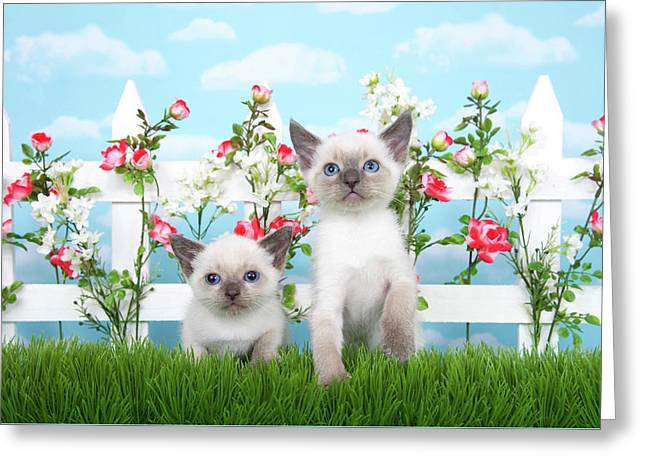 Kitten Siamese Sisters Greeting Card