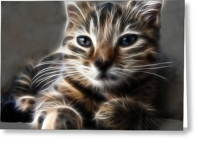Kitten Greeting Card by Tilly Williams