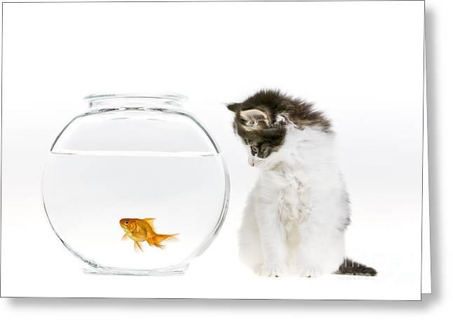 Kitten Watching A Goldfish Greeting Card by Jean-Louis Klein & Marie-Luce Hubert