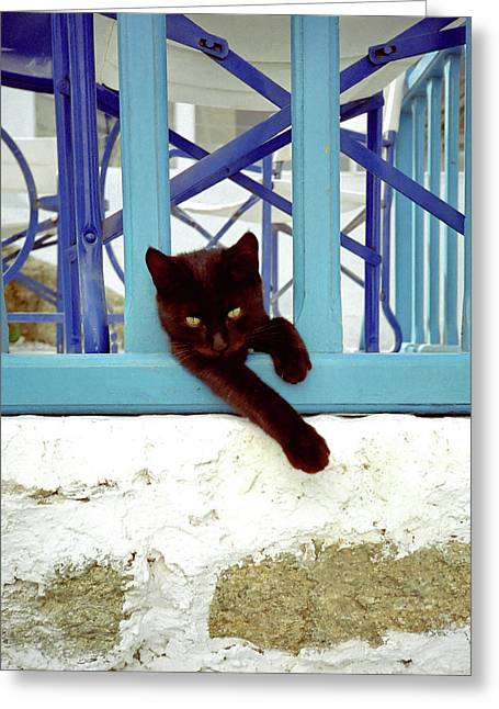 Kitten With Blue Rail Greeting Card