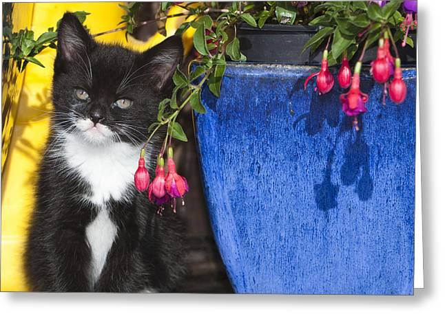 Kitten With Plants Greeting Card by Duncan Usher