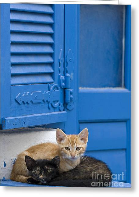 Kittens Napping Greeting Card