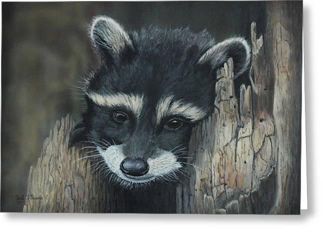 Kit...the Baby Raccoon Greeting Card