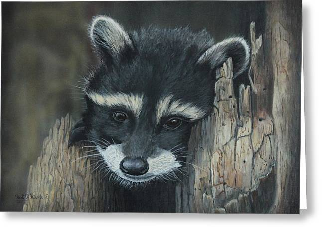 Kit...the Baby Raccoon Greeting Card