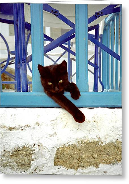 Kitty And The Blue Rail Greeting Card