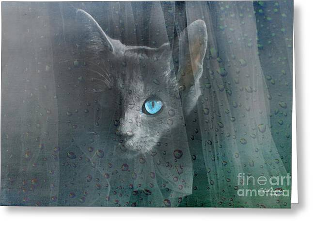 Greeting Card featuring the photograph Kitty At The Window by Chris Armytage
