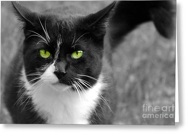 Greeting Card featuring the photograph Kitty Fallowing by Lila Fisher-Wenzel