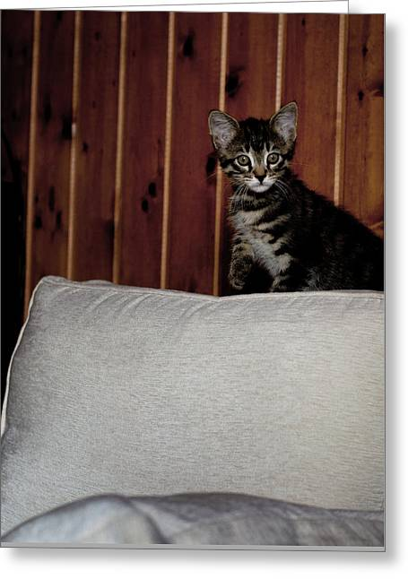 Greeting Card featuring the photograph Kitty by Laura Melis