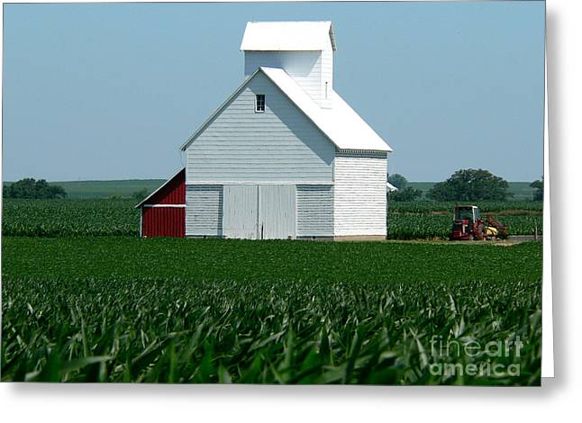 Knee High By The Fourth Of July Greeting Card by David Bearden
