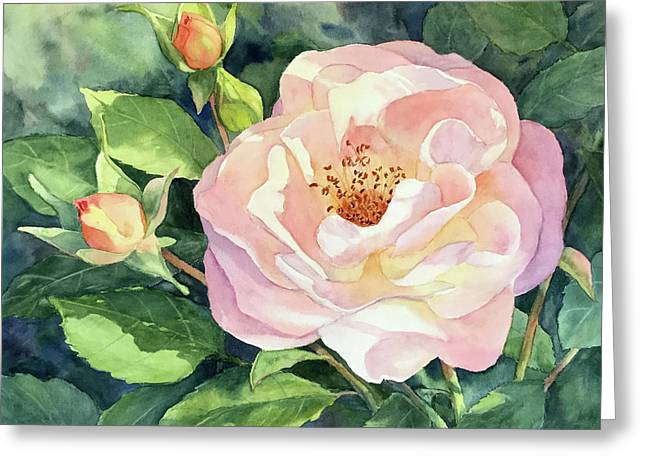 Knockout Rose And Buds Greeting Card by Vikki Bouffard