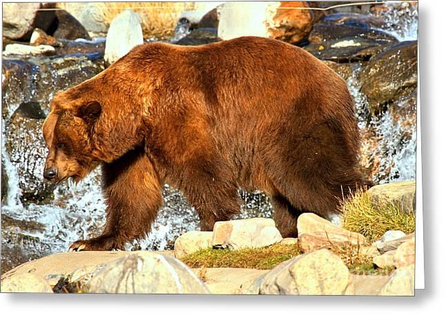 Kodiak At The Falls Greeting Card