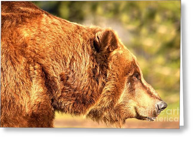 Kodiak Grizzly Portrait Greeting Card