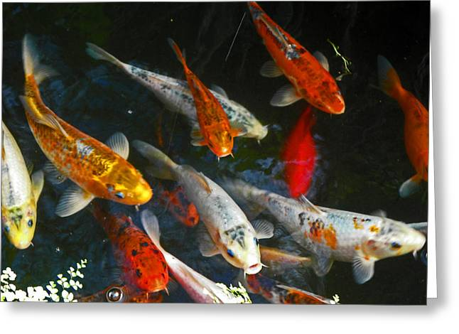 Koi Fish IIi Greeting Card by Elizabeth Hoskinson