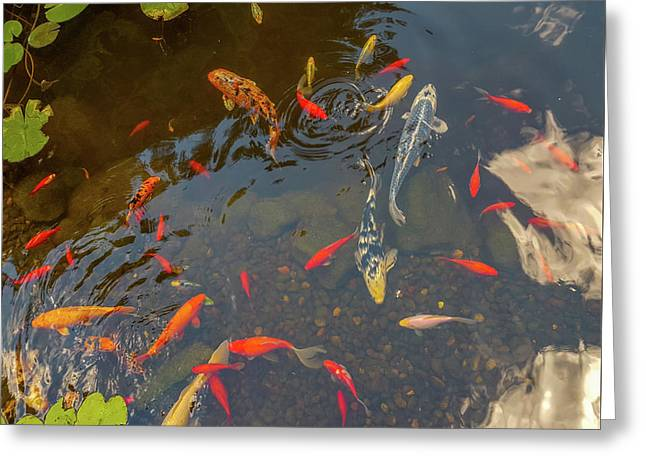 Koi Fishes In The Pond Greeting Card by Art Spectrum