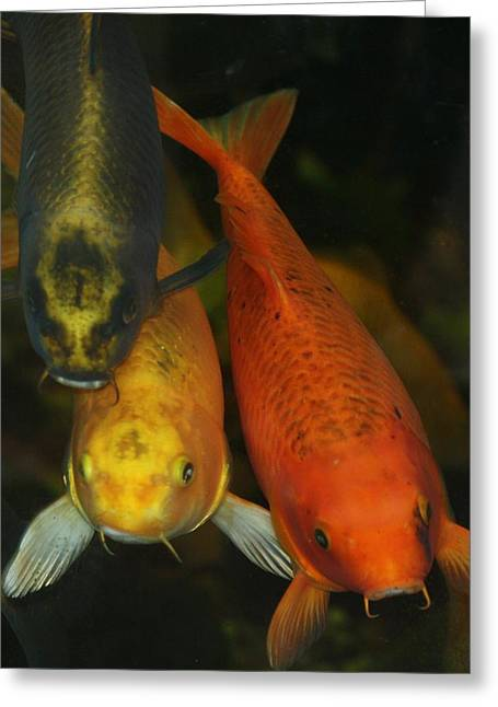 koi Greeting Card by Russell  Barton