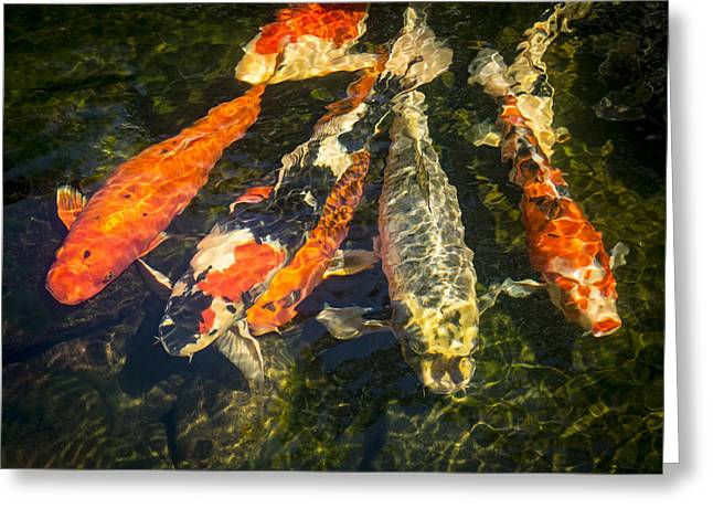 Koi Lineup Greeting Card by Jean Noren