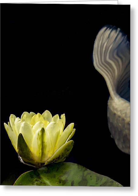 Koi Tail And Yellow Water Lily Greeting Card by Jean Noren