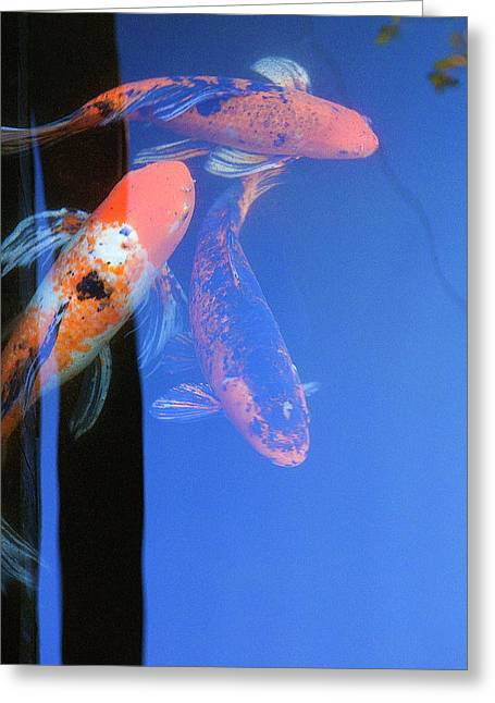 Koi Vi  Blue Greeting Card