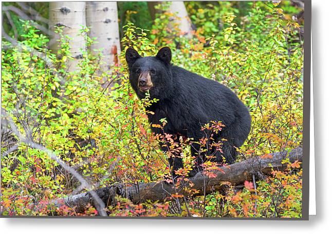 Fall Bear Greeting Card