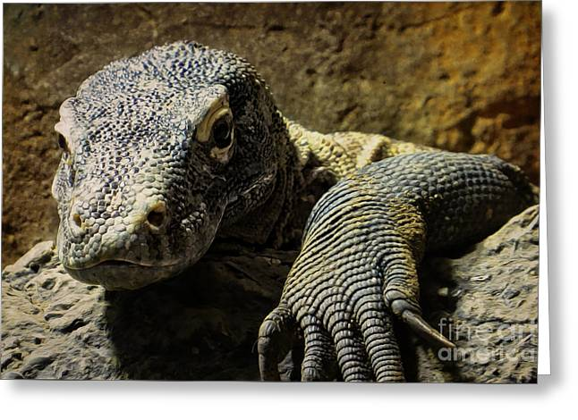 Komodo Dragon Greeting Card by Dawn Gari