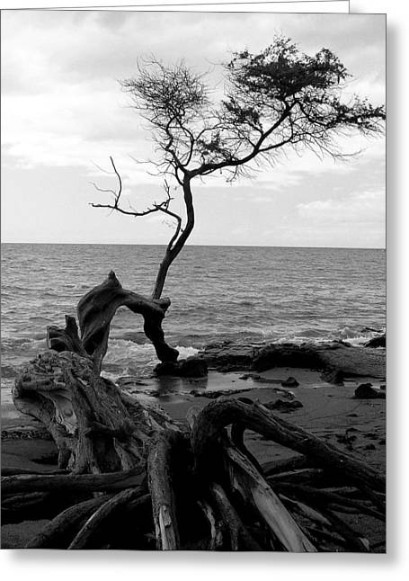 Kona Coast Tree Greeting Card