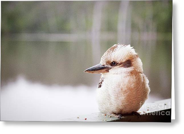 Greeting Card featuring the photograph Kookaburra by Ivy Ho