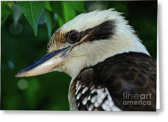Kookaburra Portrait By Kaye Menner Greeting Card by Kaye Menner