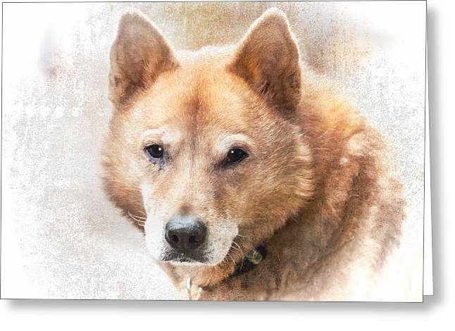 Korean Jindo Portrait Greeting Card by Eleanor Abramson
