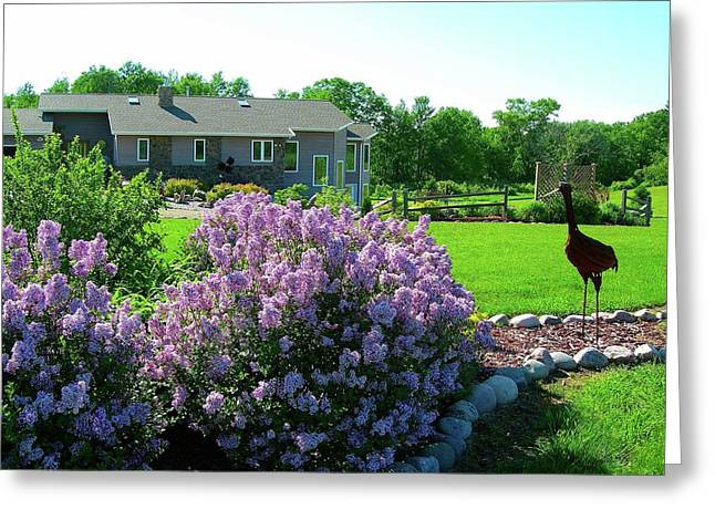Korean Lilacs And Sandhill Crane Greeting Card by Randy Rosenberger