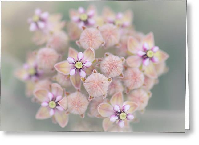 Greeting Card featuring the photograph Kotolo Flowers by Alexander Kunz