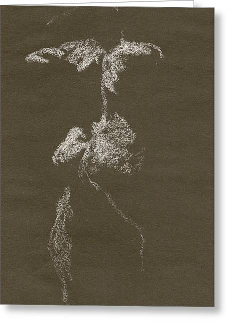 Kroki 1997, Pre.3 Vit Krita, Figure Drawing White Chalk Greeting Card