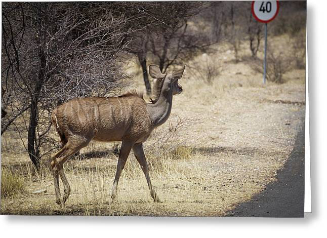 Greeting Card featuring the photograph Kudu Crossing by Ernie Echols