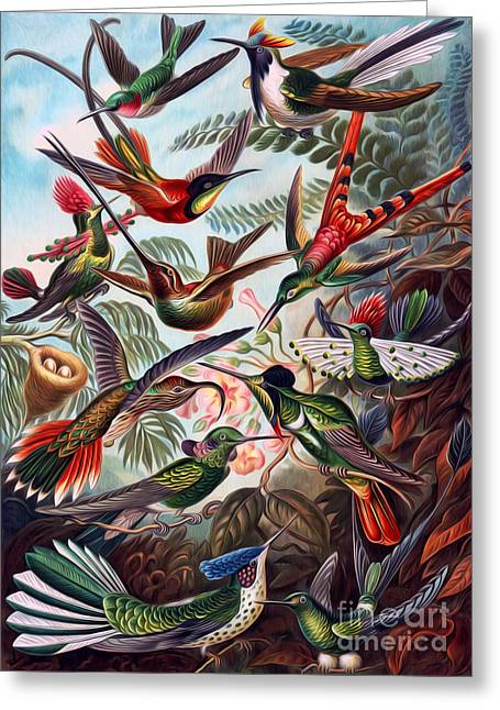 Kunstformen Der Natur Hummingbird Trochilidae Interpreted Greeting Card by Pablo Avanzini